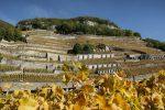 Les Murailles, vignoble emblématique de Badoux Vins